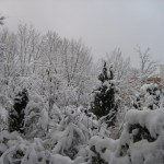 rohr_winter_2008_003