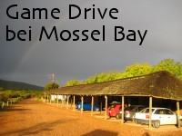 game drive mossel bay bilder